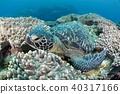 烏龜 海底的 海裡 40317166