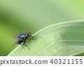 곤충, 벌레, 빛 40321155