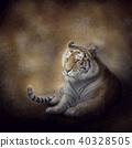 Bengal Tiger resting 40328505