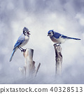 Blue Jay birds 40328513
