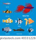 เวกเตอร์,ภาพประกอบ,ปลา 40331226