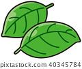 羅勒 羅勒屬植物 香草 40345784