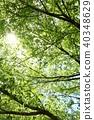 잎, 이파리, 잎사귀 40348629
