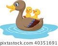 ducks on the pond 40351691