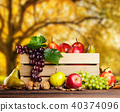 yellow, autumn, wood 40374096