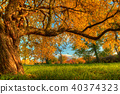 Beautiful autumn tree with fallen dry leaves 40374323