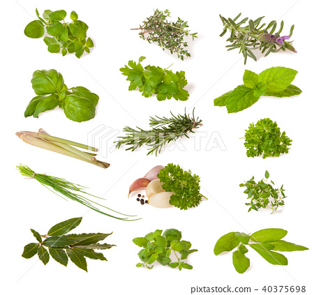 Various fresh herbs on white 40375698