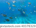 Underwater flock of fish 40376320