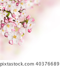 Spring blossoms on white background 40376689