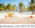 sea, seashell, sand 40376760