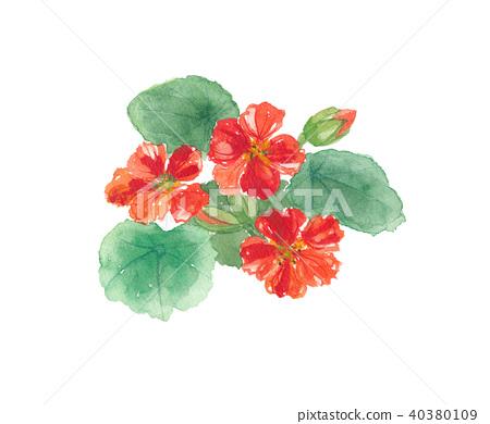 nasturtium, tropaeolum, flower 40380109