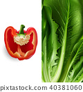 Lettuce and tomato. Vector illustration 40381060