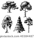 Vector tree sketch hand drawn style types green forest pine treetops collection of birch, cedar and 40384487