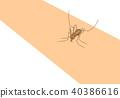 Mosquito sucking blood 40386616