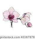 상세한, 난초, 삽화 40387878