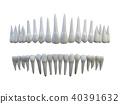 isolated teeth 40391632
