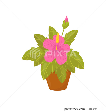 Houseplant With Pink Flowers And Wide Green Stock Illustration 40394386 Pixta