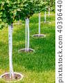 Young tree plantation up close 40396440