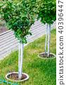 Young tree plantation up close 40396447