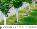 Young tree plantation up close 40396448