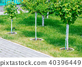 Young tree plantation up close 40396449