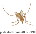 Mosquito Caeca have opened their wings and stopped 40397998