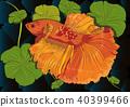 Vector color drawing of  betta illustation. 40399466