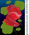 Vector color drawing of  betta illustation. 40399470