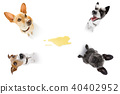 couple dog pee 40402952