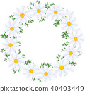 flower, flowers, marguerite 40403449