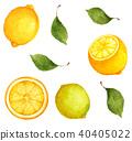 柠檬 40405022