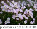 花朵 花 花卉 40408104