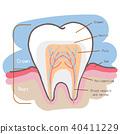 cartoon tooth chart 40411229