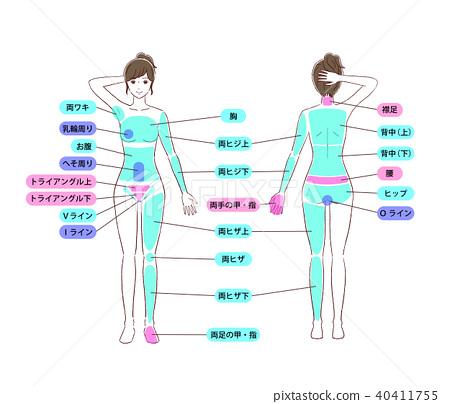 解剖学 肉 肉体 40411755