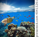 Underwater coral reef with horizon and water surface 40413261