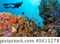 Scuba diver explore a coral reef 40413278