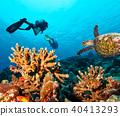 Scuba divers explore a coral reef 40413293