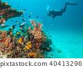 Woman scuba diver exploring sea bottom 40413296