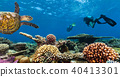 Scuba divers explore a coral reef 40413301