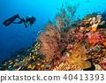 Scuba diver explore a coral reef 40413393