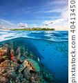 Hawksbill Sea Turtle exploring coral reef under water surface 40413450
