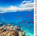 Underwater coral reef with horizon and water waves 40415616