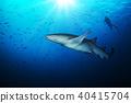 Bonnethead shark with silhouette of scuba diver 40415704