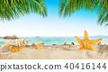 shell, sand, beach 40416144