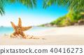 shell, sand, beach 40416273