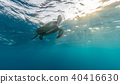 Hawksbill turtle trying to breath. 40416630