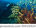 Young woman scuba diver exploring coral reef 40416924