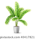 Palm tree leaves in a pot 40417821
