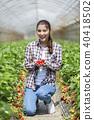 딸기 따기를하는 여성 40418502