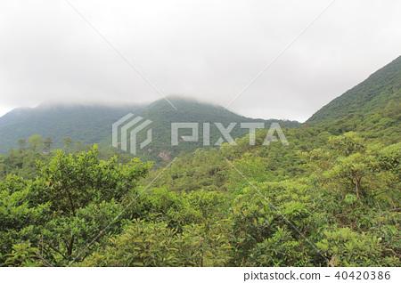 foggy day at Hong Pak Country Trail 40420386